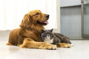 DuPage County property division attorneys, pet custody
