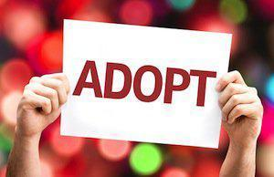 DuPage County adoption lawyers, related adoptions